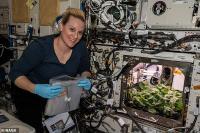 Astronot Berhasil Tanam Lobak Pertama Kali di Luar Angkasa