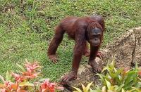 Jalan-Jalan ke Bali Zoo, Binatangnya Sehat dan 3M Ketat