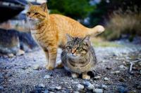 Viral Rumah Jagal di Medan Culik Kucing Peliharaan untuk Dijual Dagingnya Rp70 Ribu per Kg