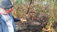 Gegara Panen Madu, 2 Hektar Lahan Terbakar