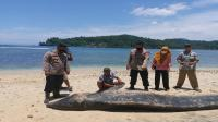 Nelayan Temukan Paus Mati Terdampar di Pantai Pekon Tengor Tanggamus