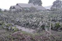 8 Desa Terdampak Abu Vulkanik Gunung Sinabung