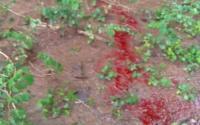 Air Tanah Warna Merah Darah Keluar dari Dekat Pohon Jati