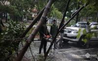 Pohon di Parkiran Bandara Sultan Hasanuddin Makassar Tumbang Timpa 3 Kendaraan
