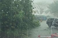 Hujan Disertai Angin Kencang Tumbangkan Belasan Pohon di Bantul