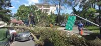 5 Mobil Tertimpa Pohon Tumbang