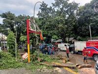Hujan Deras, Pohon Tumbang Timpa Billboard Minimarket di Tangsel