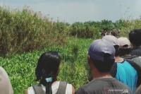 Pergi Cari Rumput, Warga Banyuasin Hilang Diduga Diserang Buaya