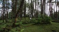 Pemerintah Akan Berikan 13,9 Juta Hektare Hutan untuk Dikelola Masyarakat