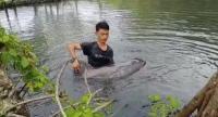 Lumba-Lumba Ditemukan Tersesat Masuk ke Empang Warga