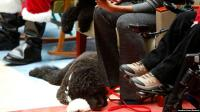 'Bo' Anjing Milik Obama Mati karena Kanker