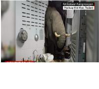 Gajah <i>Ngamuk</i>, Masuk ke Rumah Warga Cari Makanan
