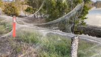 Jutaan Laba-Laba Tebarkan Jaring 'Seluas 1 Kilometer' Setelah Banjir Bandang di Australia