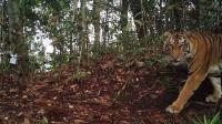 Cerita Si Kapuk dan Si Kumbang, Dua Macan Gaib Peliharaan Sultan Banten