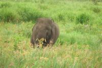 Kebakaran Hutan dan Lahan di Sumsel, Begini Kondisi 50 Gajah di Kawasan Konservasi