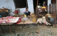 'Pasar Basah' di Asia Masih Terus Beroperasi, WHO dan PETA Minta Ditutup