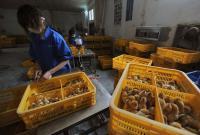 China Temukan Lagi Kasus Flu Burung H5N6 pada Manusia