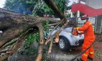 Hujan Disertai Angin Kencang dan Es di Depok, Sejumlah Pohon Tumbang