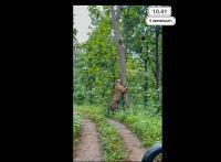 Viral Video Harimau di Hutan Kedungjati Grobogan Ternyata Hoaks