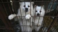 Presiden Korsel Pertimbangkan Larangan Konsumsi Daging Anjing