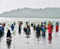 Jokowi: Indonesia Punya Hutan Mangrove Terluas di Dunia, Harus Dijaga!