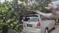Hujan Deras dan Angin Kencang di Bogor Tumbangkan Pohon, Terbangkan Atap