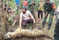 Harimau Sumatera Kembali Ditemukan Mati Terjerat di Riau