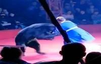 Pelatih Sirkus yang Hamil Diserang Beruang, Penonton Anak-Anak Teriak Ketakutan