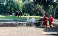 Dishub Terapkan Ganjil-Genap di Taman Margasatwa Ragunan