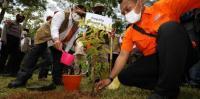 Mitigasi Bencana Berbasis Vegetasi, Kepala BNPB dan Gubernur Maluku Tanam Pohon Damar
