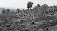 Suriah Eksekusi Mati 24 Orang yang Bakar Hutan, 5 Anak-Anak Dihukum Penjara hingga 12 Tahun