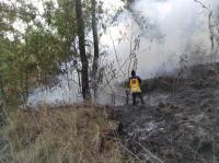 Kebakaran Lahan Terjadi di Taman Wisata Alam Gunung Batur Bukit Payang Bangli
