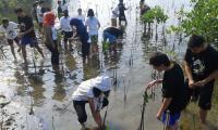 Pemerintah Percepat Rehabilitasi Mangrove di Bangka Belitung