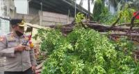 Jakarta Dilanda Angin Kencang, Pohon Beringin Tumbang Timpa Warung dan Motor