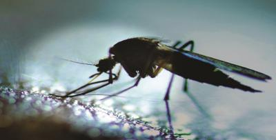 Tahukah Anda, Nyamuk Tak Sembarangan Mengincar Target