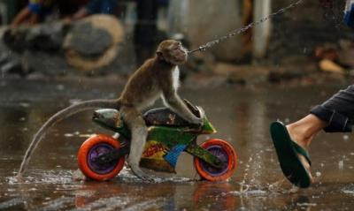 Penyiksaan Binatang Viral di Medsos, Petugas Buru Pengamen Topeng Monyet di Cakung