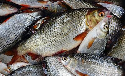 3 Bahan untuk Menghilangkan Bau Amis Ikan, Apa Saja?