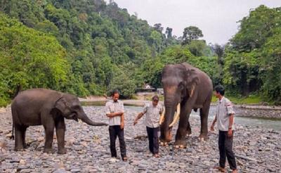 Eksotisme Tangkahan di Sumatera Utara, Surga Tersembunyi Nicholas Saputra