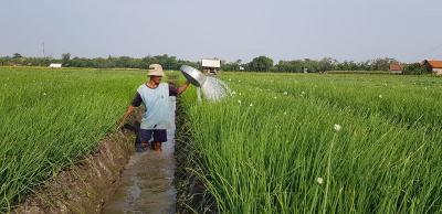 Sektor Pertanian Berjaya saat Pertumbuhan Ekonomi Minus 5,32%