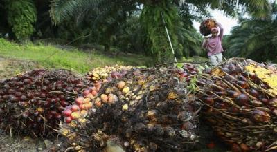 Indonesia Siap Pakai CPO untuk Pembangkit Listrik Tenaga Diesel