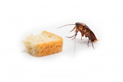 5 Cara Mencegah Kecoa Masuk Dapur