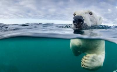 Asyik, Hotel Ini Tawarkan Menginap Sambil Melihat Beruang Kutub