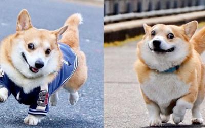 Gen, Si Anjing Berwajah Ekspresif yang Viral di Medsos