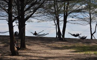 Asyiknya Menikmati Semilir Angin di Antara Pohon Pinus di Pantai Tiram