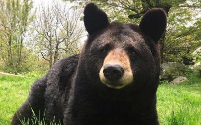 Keluarga Ini Terkejut saat Seekor Beruang Ikut Bergabung dalam Pesta di Hutan