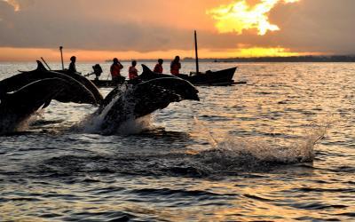 Liburan di Pantai Lovina Bali, Rasakan Sensasi Bermain dengan Lumba-Lumba