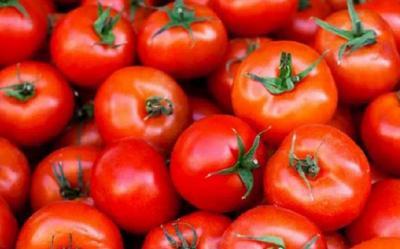 Sering Makan Tomat Yuk, Ini 5 Manfaatnya buat Kamu