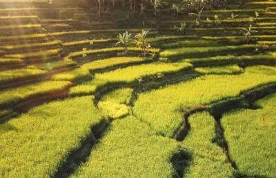 Intip Pesona Agrowisata Terasering di Dusun Cisalada yang Memanjakan Mata