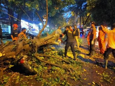 4 Motor Ojol Ditimpa Pohon Tumbang di Bogor, Driver: Enggak Nyangka