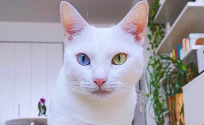 Kehilangan Kucing Kesayangan, Atasi Kesedihanmu dengan 5 Cara Ini
